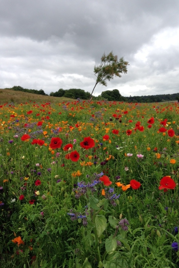 Floral Meadow at Silverknowes Foreshore shared by Edinburgh Living Landscapes
