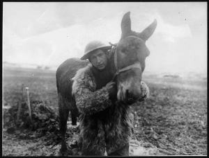 soldier and mule photo