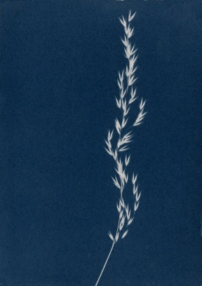 Cyanotype by Charly Murray